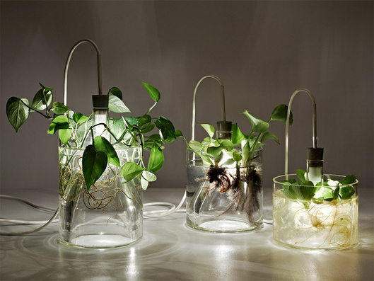 Growing lamps