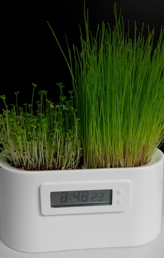 plant digital clock