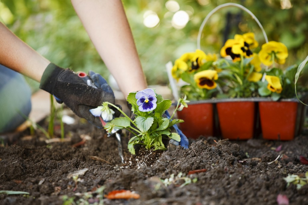 How to Grow Flowers How Ornament My Eden