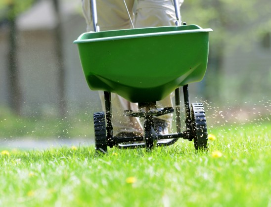 Lawn Seeding Overseeding Your Lawn In Kansas City What To Av