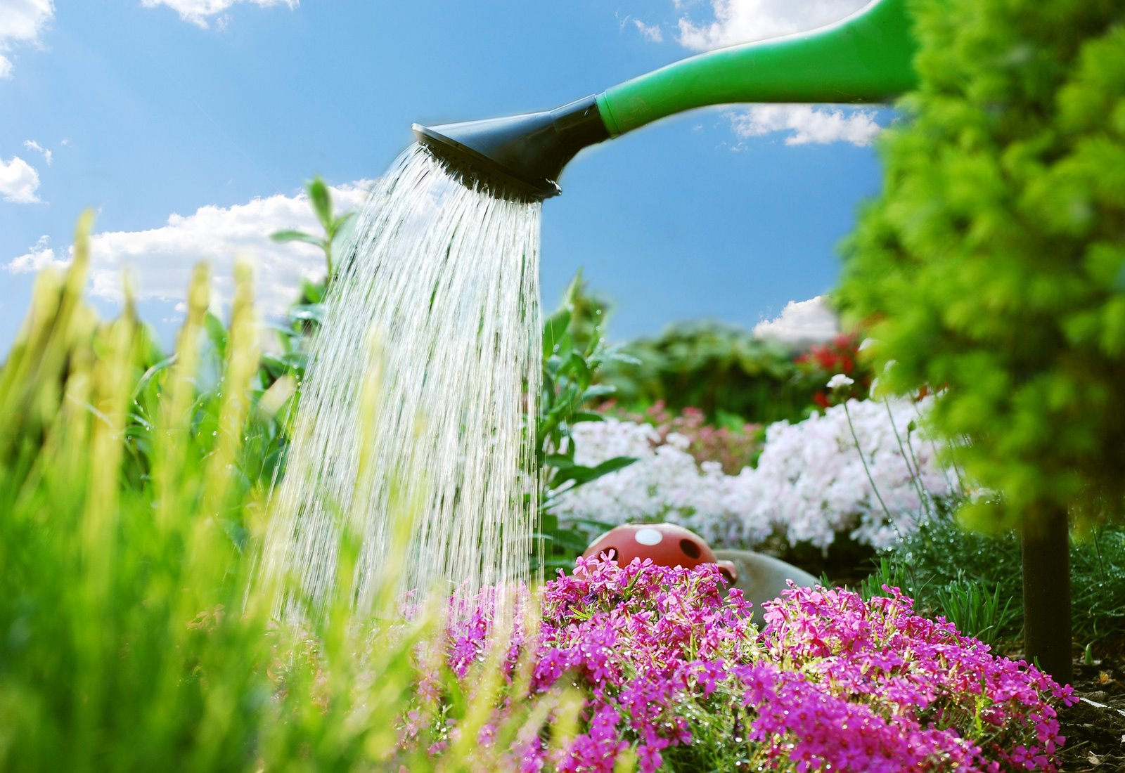 Easy and useful garden watering tips how ornament my eden for Easiest outdoor plants