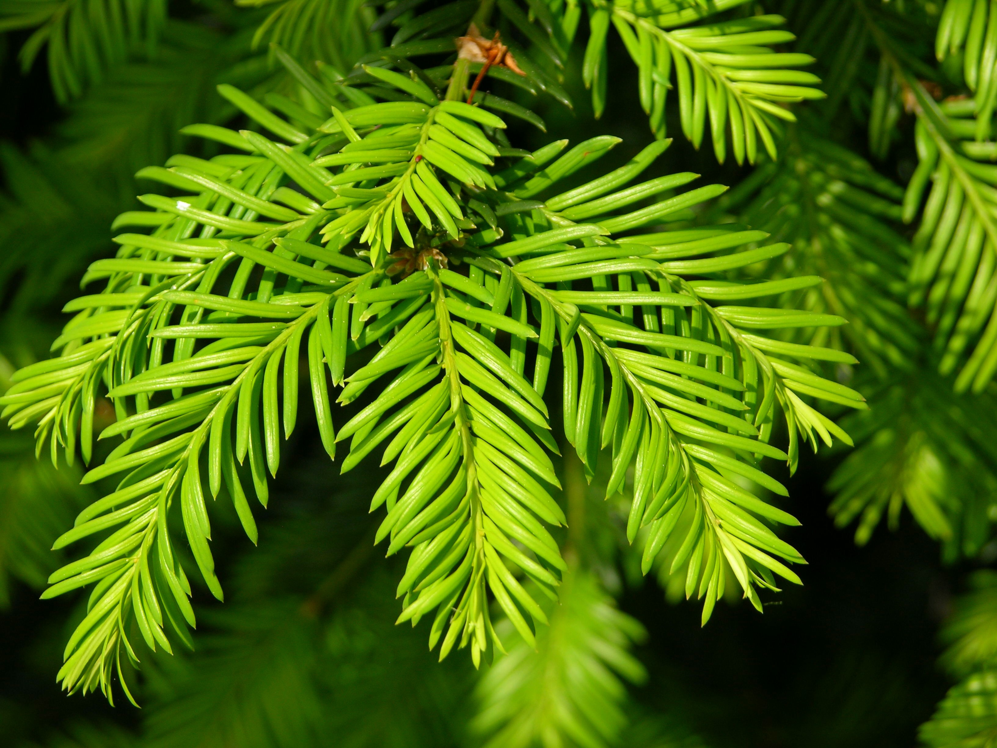 How To Protect Your Evergreen Trees And Shrubs