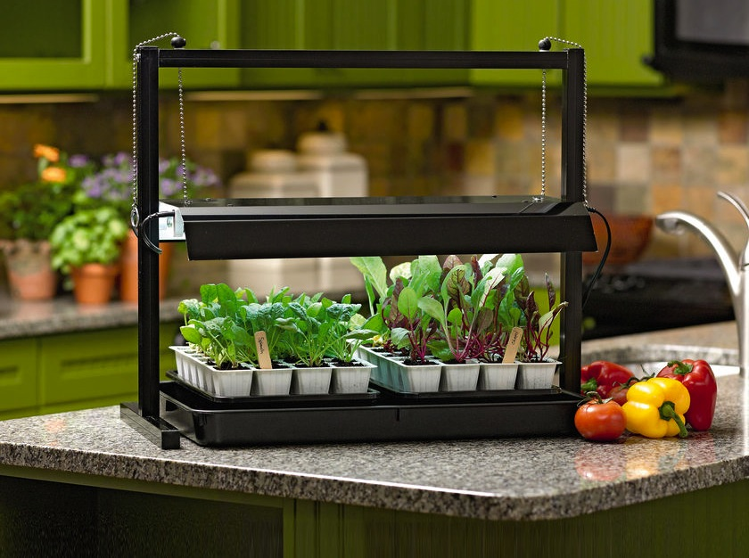 how to use grow lights to start seeds