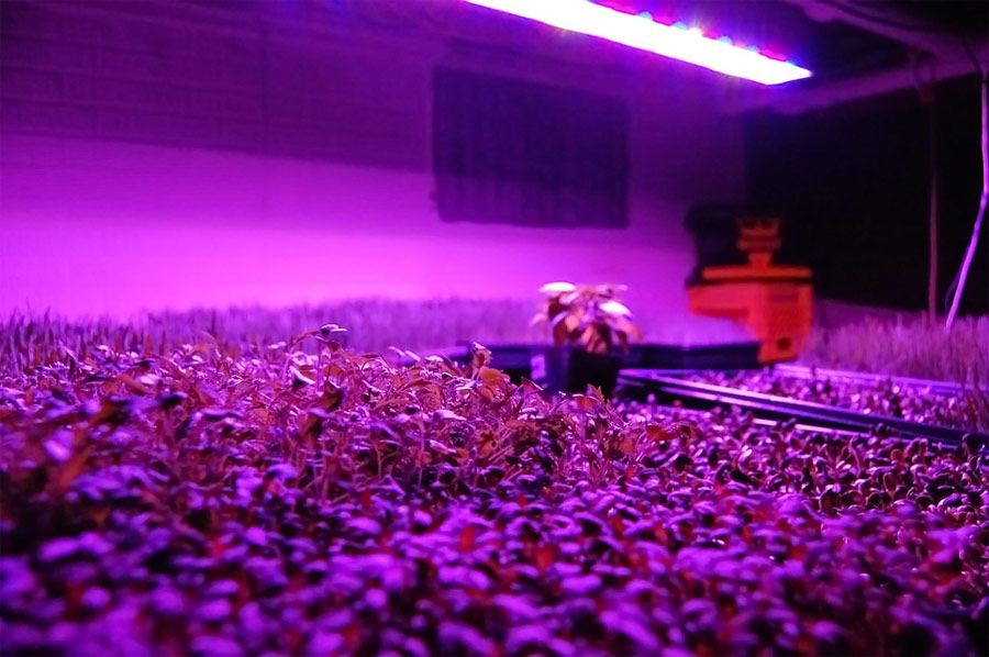 LED Plants Grow Light