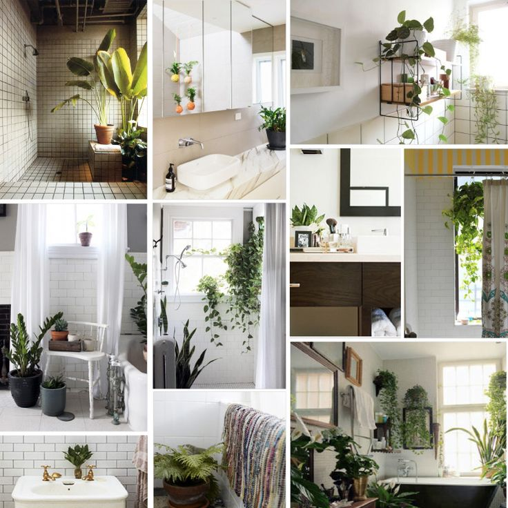 4 creative elements for your bathroom how ornament my eden - Houseplants for the bathroom ...